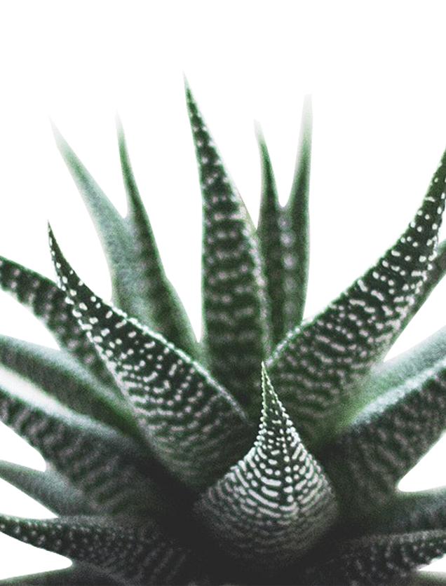 Sukkulenten, Pflanze